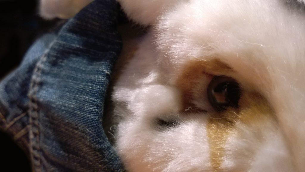 Foto Rabbit Rocker 1